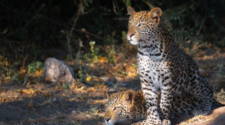 Africa 2020 Adventure to Botswana