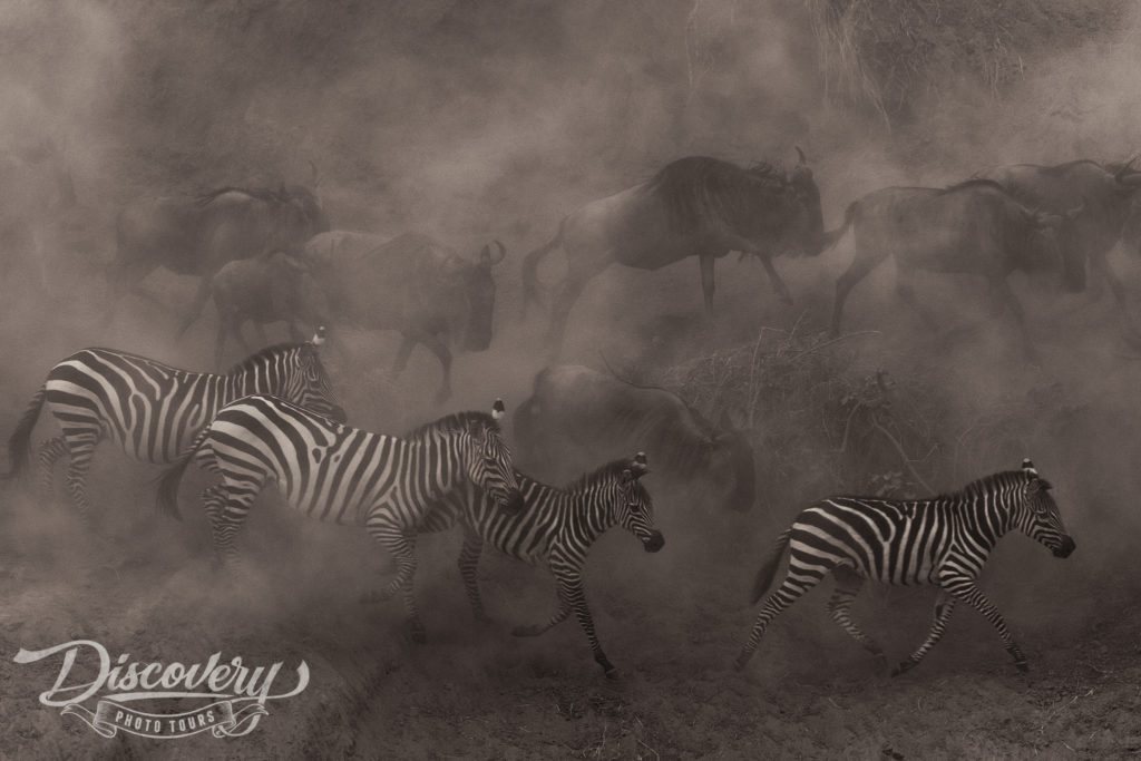 African Wildlife Adventure