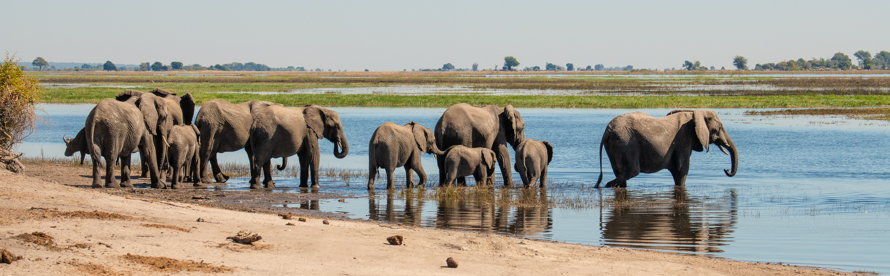 Elephants in Africa getting their feet wet in the Chobe River